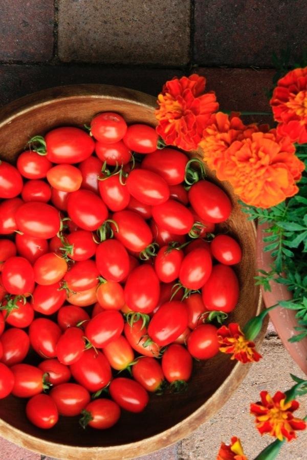 cherry tomatoes5